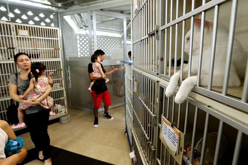Visitors to the SPCA's new premises in Sungei Tengah, which are bigger and have more facilities. However, adoption rates of abandoned and stray animals have dropped from about 95 a month at the old premises to about 66 a month. Visitor numbers have also d