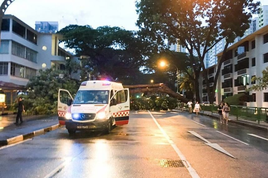 A tree fell along Tiong Bahru Road on Friday (June 17) evening following heavy rain in the area.