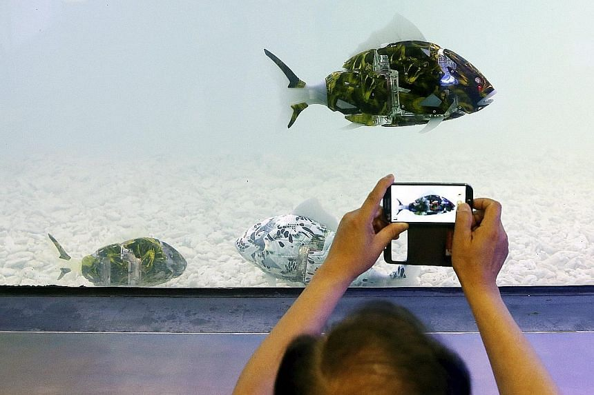 A robot fish swimming in an aquarium catches the fancy of a visitor at the 2016 Korea Aqua Pet Show, which is being held at a convention centre in Seoul, South Korea. The show started on Friday and runs until today.