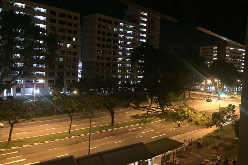 The fallen tree blocked off a stretch of road along Jurong West Avenue 4 in both directions.
