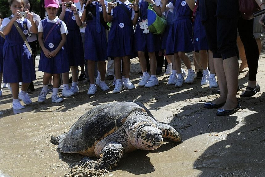 Conservation Efforts: UWS released 18 critically endangered hawksbill turtles in 2010, eight of them with satellite tracking devices to study their migratory behaviour.