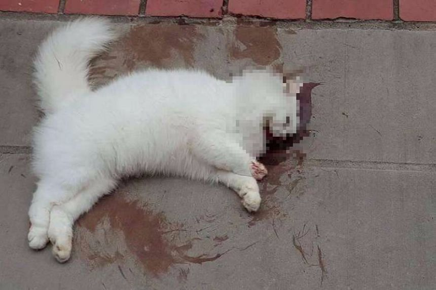 White cat found dead at the foot of Block 889, Tampines Street 81, on June 19, 2016.