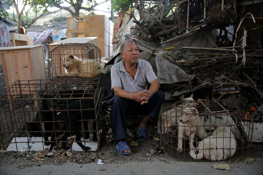 A vendor waits for buyers beside dogs in cages at a market in Yulin city, southern China's Guangxi province, on June 21, 2016.