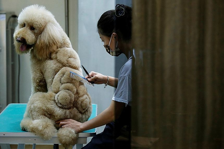 An employee trimming a teddy bear image on the fur of a dog at a pet shop in Tainan, Taiwan, on Sunday. This is no ordinary trip to the pet groomer. At the salon, some cats and dogs are getting very creative, custom cuts. Groomers may snip a pet's fu