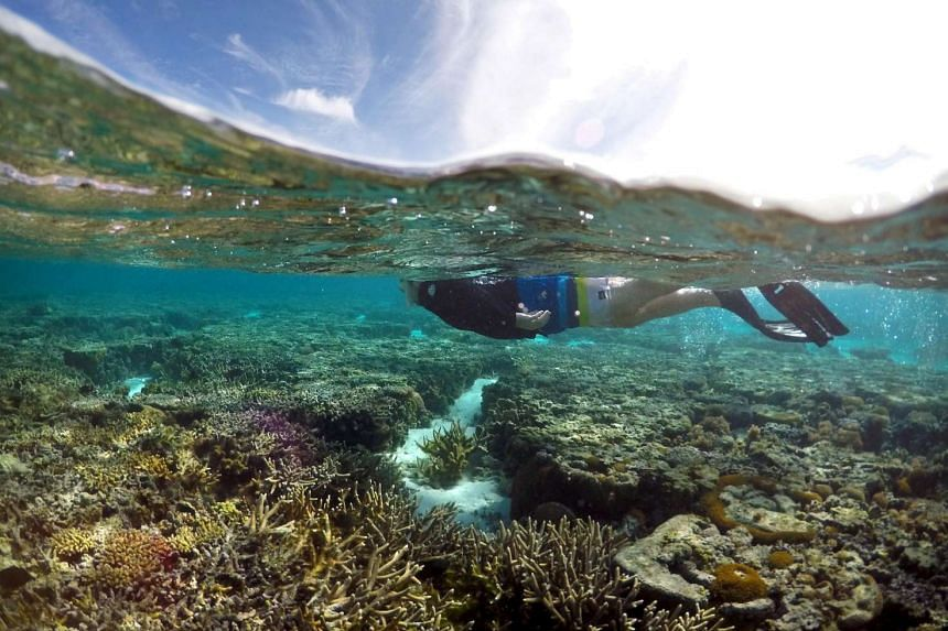 A tourist snorkels in the lagoon located on Lady Elliot Island on the Great Barrier Reef in Queensland, Australia on June 9, 2015.