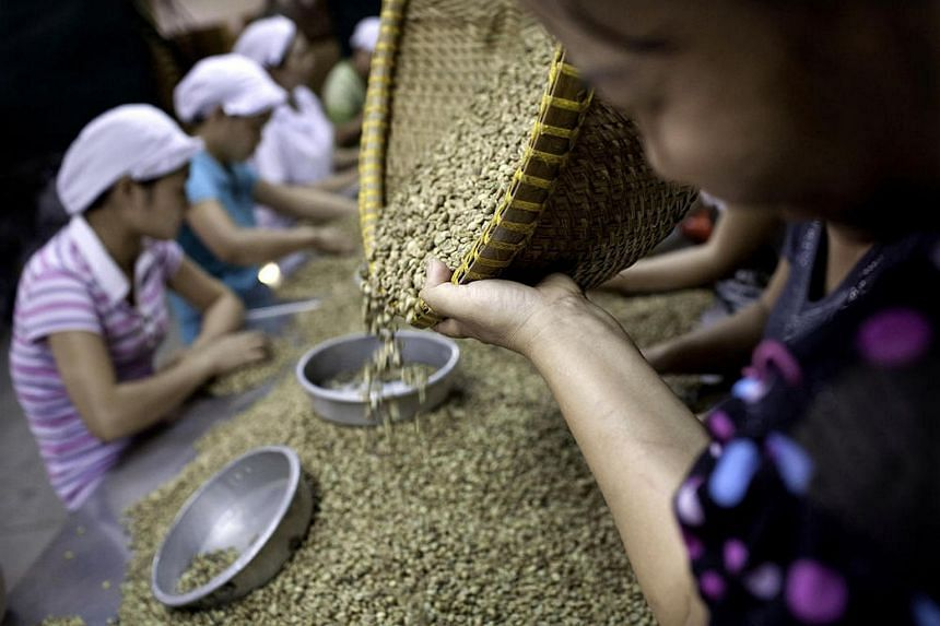Workers sort through green robusta coffee beans for defects in Ho Chi Minh City, Vietnam, in this 2010 file photo.