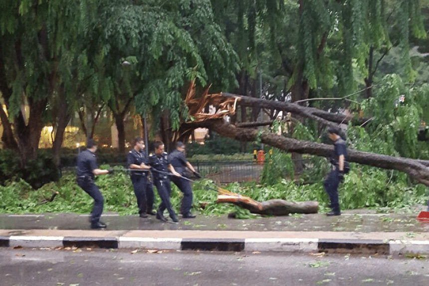 A group of police officers clearing a tree from North Canal Road on June 24, 2016.