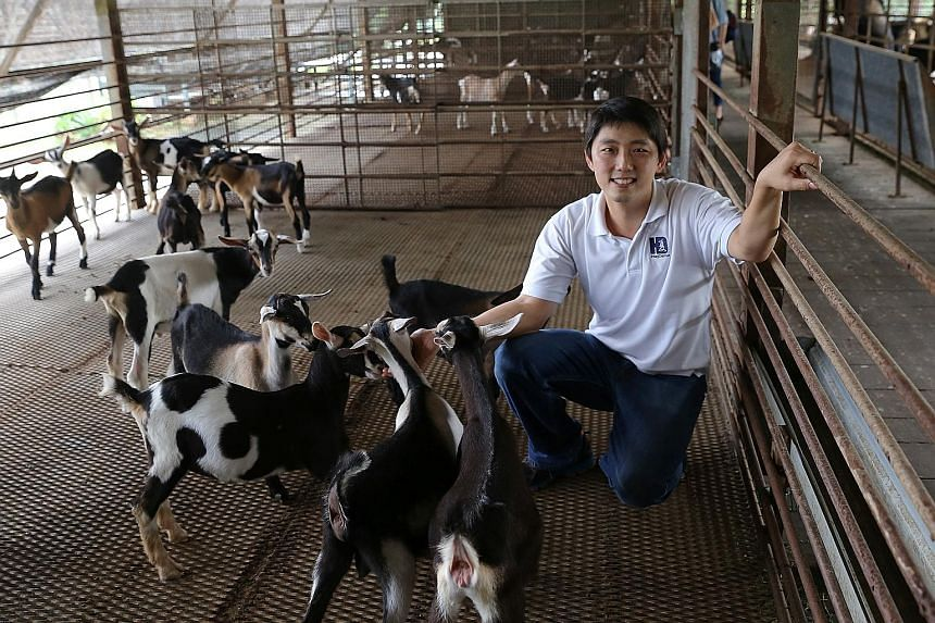 Mr Leon Hay, business director of Hay Dairies, Singapore's only goat farm, says he is willing to plunge his retirement savings into moving the farm, come 2019, if there is a future for the industry. Jurong Frog Farm director Chelsea Wan showing off a
