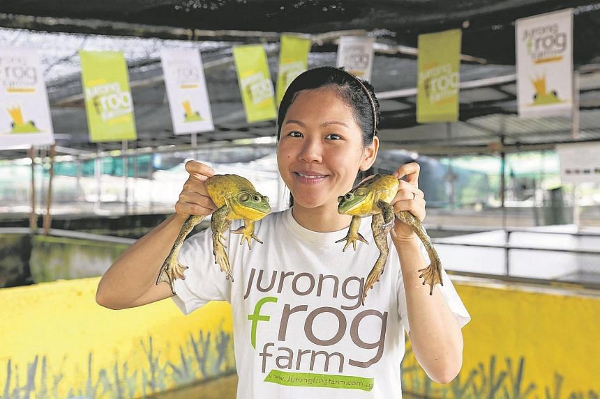Jurong Frog Farm director Chelsea Wan showing off two out of some 15,000 American bullfrogs.