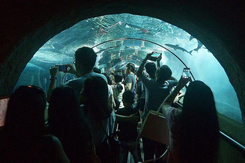Left: Visitors taking snaps and selfies in the attraction's underwater tunnel. Below: All in, about 8,500 residents and tourists thronged the 25-year-old attraction in Sentosa yesterday - more than five times the average daily visitorship.