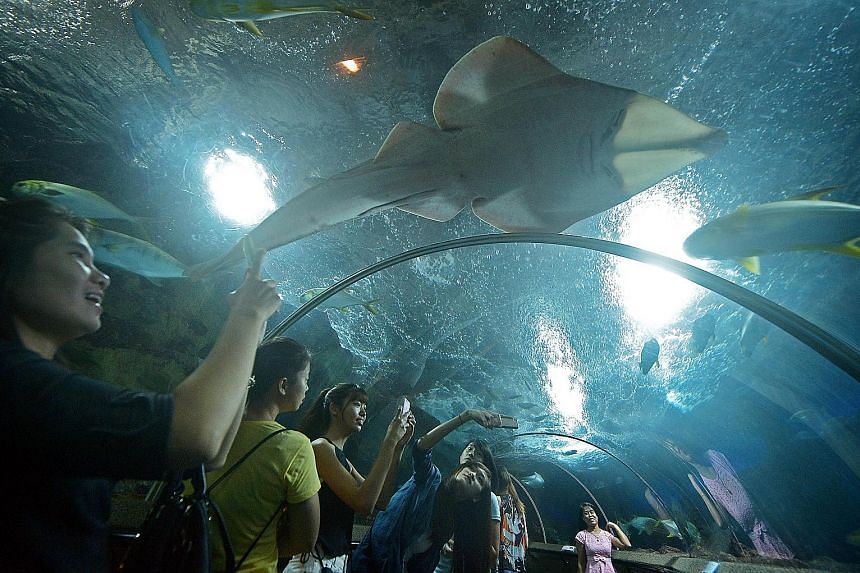 A sea of visitors snapped their last photos, videos and selfies with marine life in the submarine tunnel at Underwater World Singapore yesterday. It was the 25-year-old Sentosa attraction's final day of operations. Around 8,500 people thronged the oc