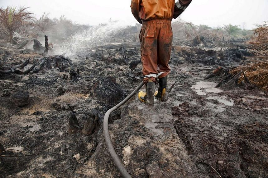 A firefighter tries to extinguish a peatland fire in a palm oil plantation in Pelalawan, Riau province, Sumatra, on Sept 26, 2015.