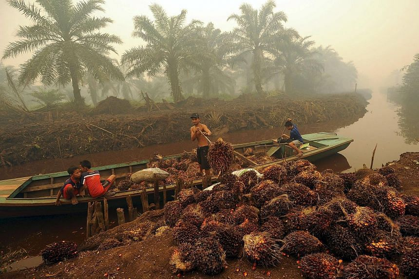 A worker unloading palm fruit at a palm oil plantation in Peat Jaya, Jambi province, Indonesia, at the height of the haze crisis in September last year. Plantations have been blamed for starting fires that caused the haze.