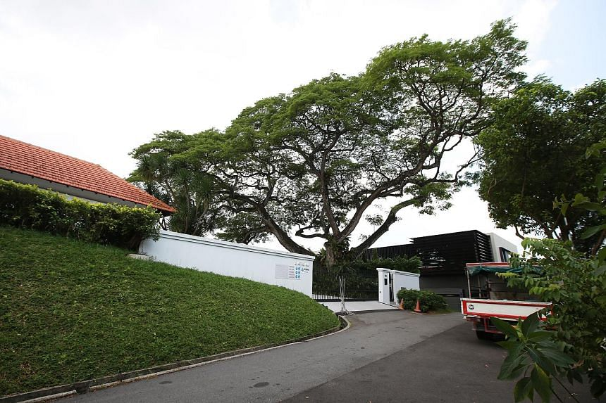The towering raintree at the centre of an acrimonious dispute that has branched out into court hearings between neighbours in the posh Astrid Hill area.