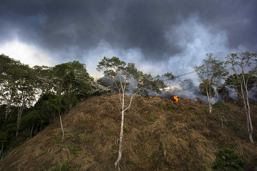 Thick smoke from a forest fire in Leuser National Park, in Aceh province, due to villagers opening the forest area for farming, on April 13, 2016.