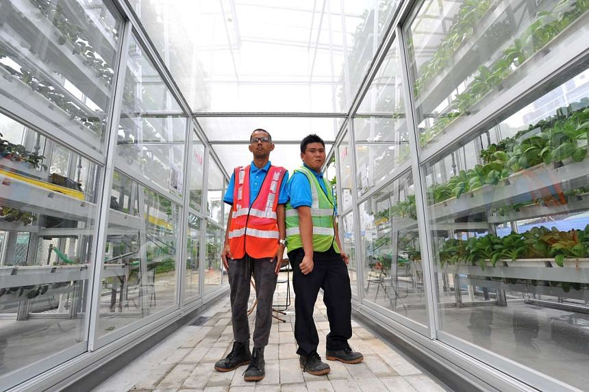 Mr Tan Guo Xiong (left) and Mr Saw Wei Yuan, both clients of APSN Centre for Adults, inside the Vertical Farm at APSN Centre for Adults on July 8, 2016.