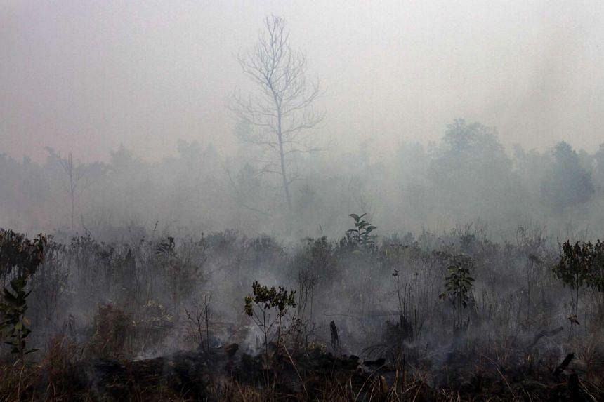 Smoke rising from a peatland fire in Pekanbaru district in Riau province, on Indonesia's Sumatra Island.