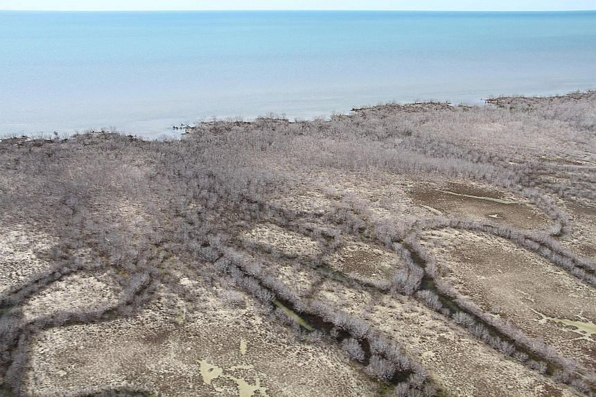 An area of dead mangroves in the Gulf of Carpentaria, which lost 9 per cent of its mangroves in just one month.