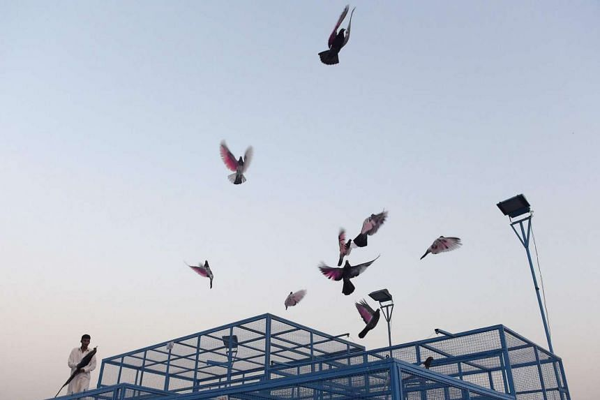A Pakistani caretaker releases racing pigeons from their cage on the final day of the pigeon race national championship in Islamabad on May 31, 2016.