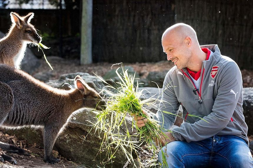 Former Arsenal star Freddie Ljungberg feeding kangaroos at Taronga Zoo. The Gunners' Under-15s coach is in Sydney to hype up their two friendly games next July.