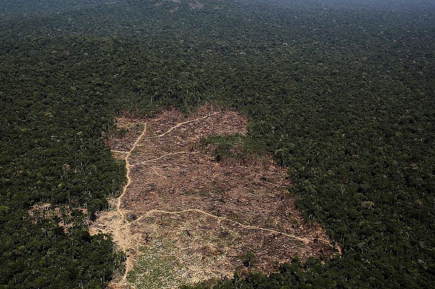 A tract of Amazon jungle cleared by loggers and farmers in 2013. Human activity has pushed biodiversity levels to nearly 85 per cent, lower than the 90 per cent level proposed as a safe limit.