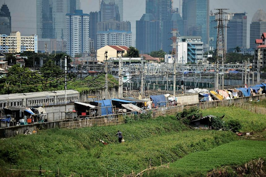 A man farms on a river bank before the city skyline in Jakarta. Indonesia launched a tax amnesty in a bid to give Southeast Asia's top economy a multi-billion-dollar boost, defying criticism the move will let evaders off the hook.