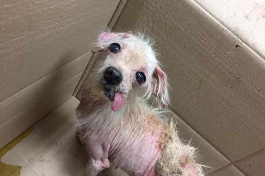 An abandoned dog rescued by Voices for Animals.