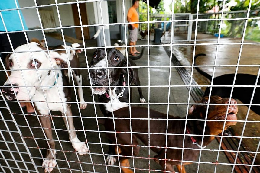 Dogs under quarantine at Sunny Heights daycare centre yesterday. It has been issued an isolation order, prohibiting any dogs from entering or leaving the premises during the investigation without AVA's authorisation.