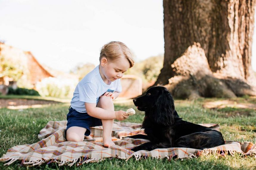 Prince George sits on a picnic blanket while offering an ice cream to the family dog Lupo.