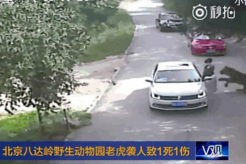 Security camera footage captured just moments before the tiger attacked the first woman at Beijing Badaling Wildlife World. News portal Sohu said she was recovering from her injuries in hospital. A second woman who rushed out to help was mauled to de