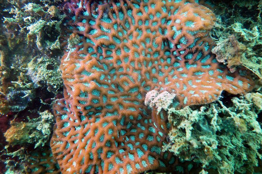 Corals and marine life at Keppel Bay, King's Dock.