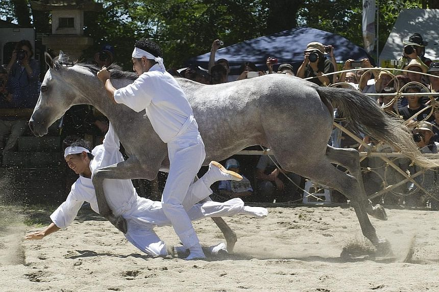 Young local men trying to capture a sacred wild horse as an offering to Shinto gods during a ritual yesterday at the Nomaoi Equestrian Samurai Festival in Minami Soma City, 17 km from the destroyed nuclear power plants in Fukushima prefecture. The ri