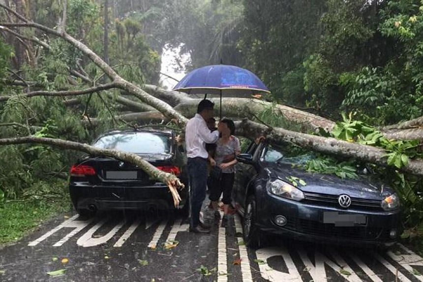 The fallen tree along Sime Road following heavy rain on Tuesday (July 26) morning.