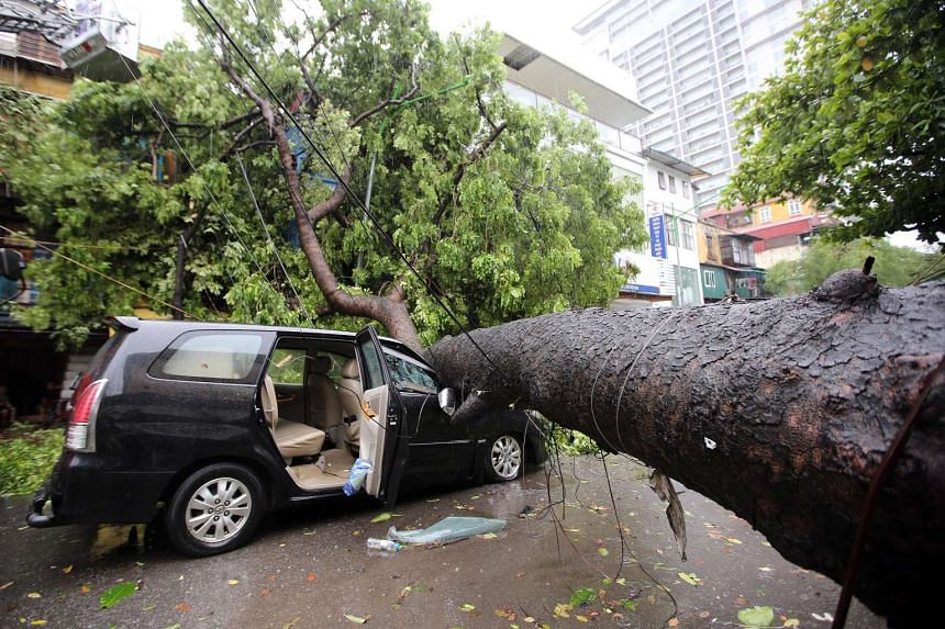 A fallen tree blocks a street in Hanoi, on July 28, 2016.