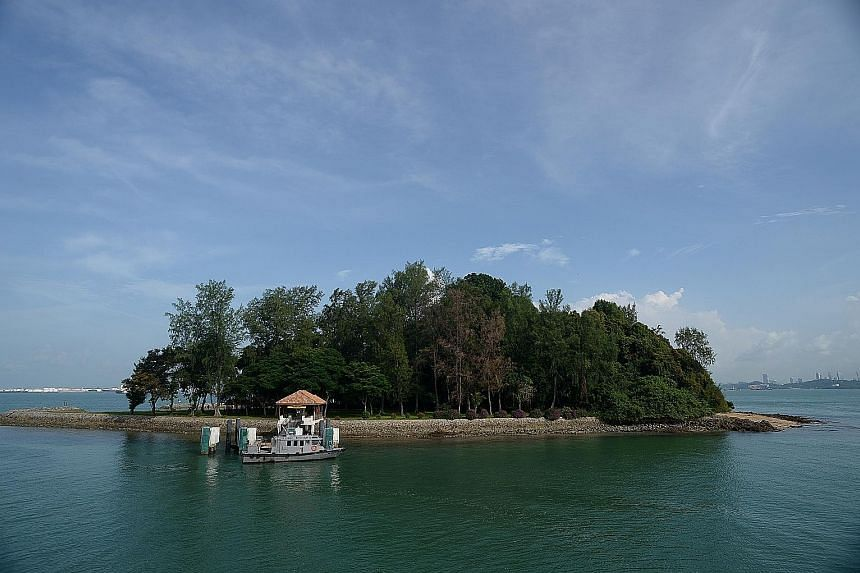 A view of Sisters' Islands, which is part of Singapore's first marine park (above); a nudibranch, a type of sea slug; five-spot anemone shrimps (Periclimenes brevicarpalis); and a tiger-tailed seahorse (Hippocampus comes), all seen in the area.