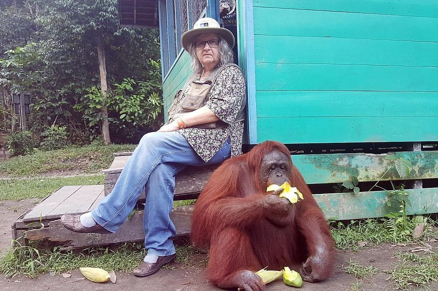 Dr Galdikas (above) believes education will eventually end the practice of eating orangutan meat in Kalimantan, while tourism will create jobs for the locals and discourage them from working in palm oil businesses.
