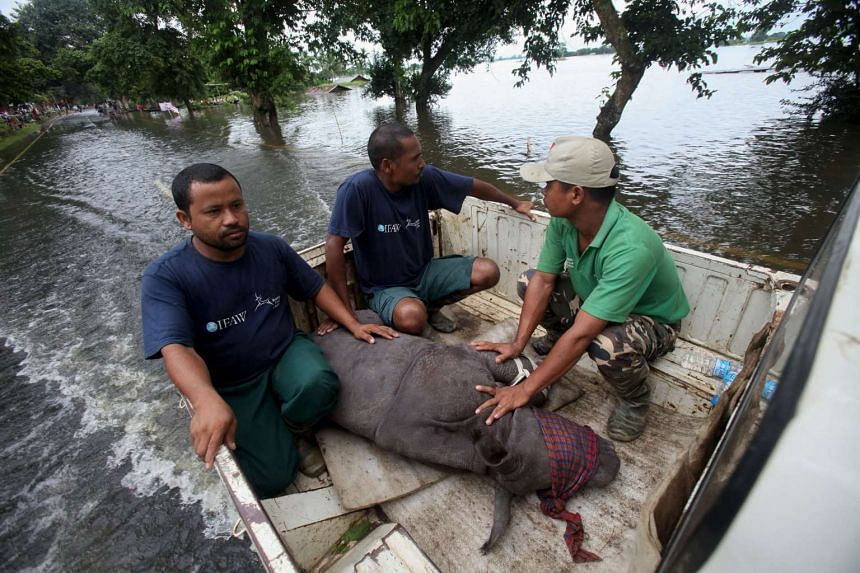 A rescued rhino calf is transported to safety after being found by IFAW-WTI wildlife officials and volunteers in flood waters on July 27, 2016.