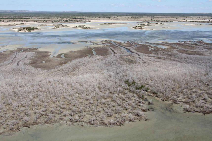 A vast area of dead mangroves in the Gulf of Carpentaria, in Australia's remote north.