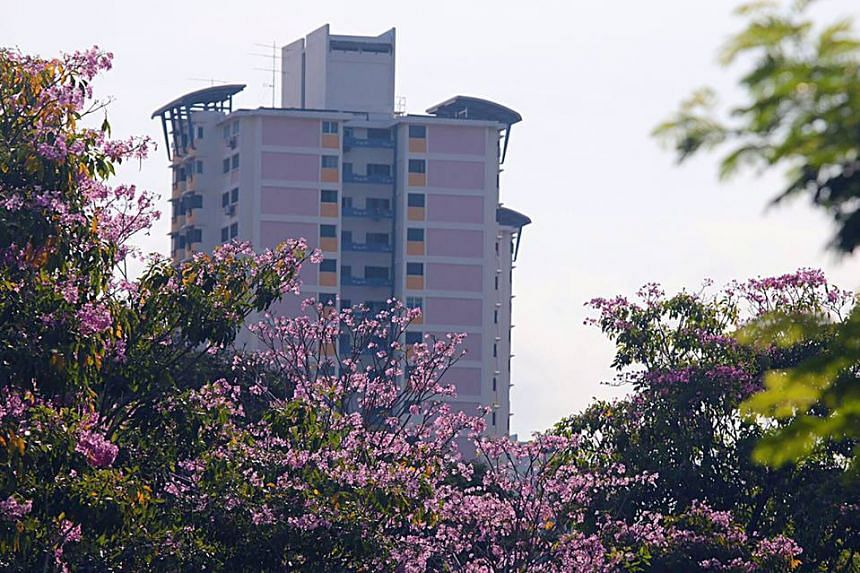 Blooms seen along CTE near Cambridge Road in Singapore.