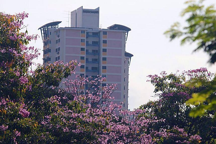 Blooms seen along CTE near Cambridge Road in Singapore.