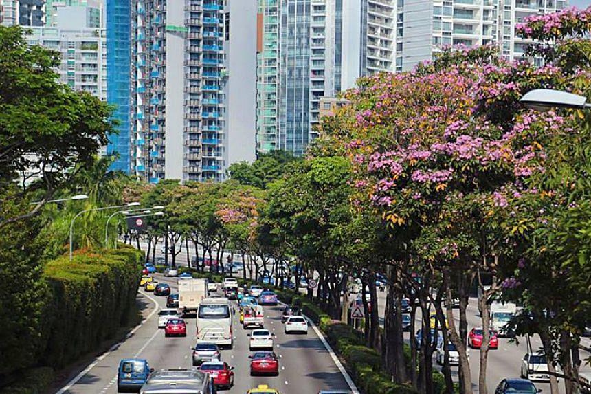 Flowers along CTE near Cambridge Road in Singapore.
