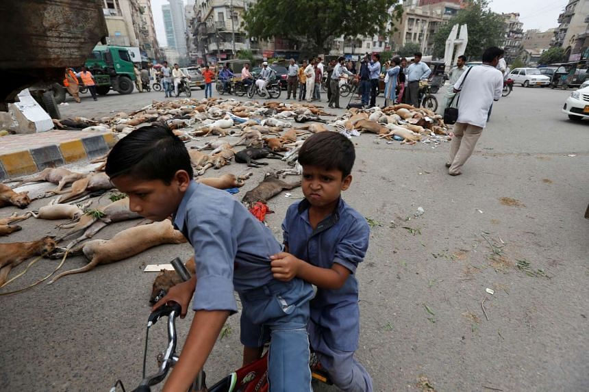Children react as they pass the carcasses of dead dogs, collected after they were culled using poison in Karachi.