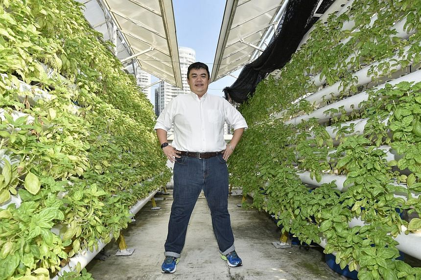 Comcrop CEO Allan Lim at his rooftop aquaponic farm. Mr Lim is optimistic that one day, the roofs of HDB estates and multistorey carparks could house similar urban rooftop farms.