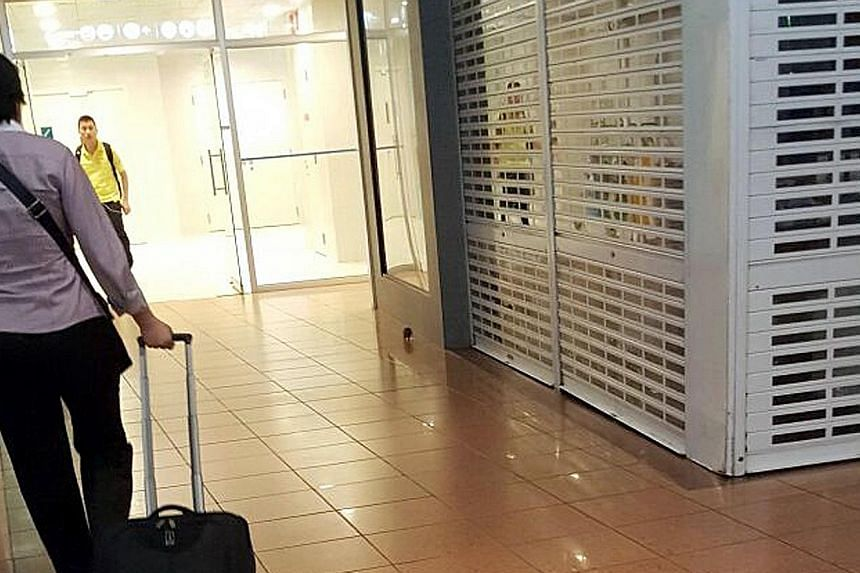 Ms Ong, who works at HarbourFront Centre, spotted a rat in the mall in June. The mall management and the NEA are now working together to ensure that the rat situation is resolved.