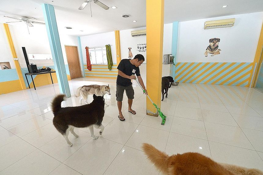 A Sunny Heights staff member mops the floor more often to keep the place cleaner. As an extra precaution, daycare and rescued dogs are now kept in separate buildings while the authorities conduct further tests.