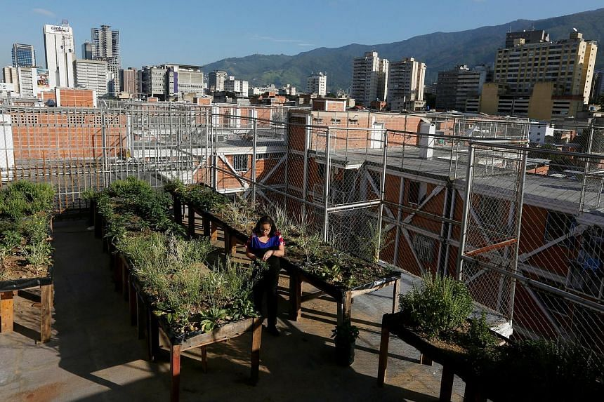 Venezuelans have turned their balconies and rooftops into little urban farms as severe food shortages lead to looting and riots in the Opec country.