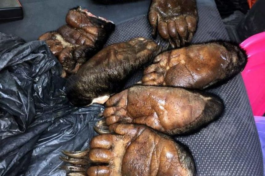 Two men from Sabah were arrested by Malaysian authorities for trying to sell body parts of protected Malayan sun bears.