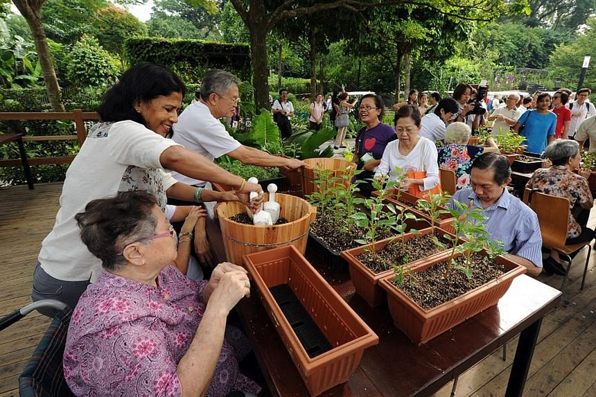 The therapeutic garden at HortPark has customised benches for potting, moveable raised beds and access to water. All these make it more convenient for the elderly and wheelchair users to join group gardening activities.