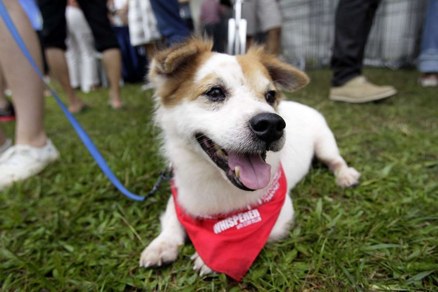 Pet businesses will be expected to comply with a new code that spells out standards and best practices for the industry, which will take effect on Oct 1.