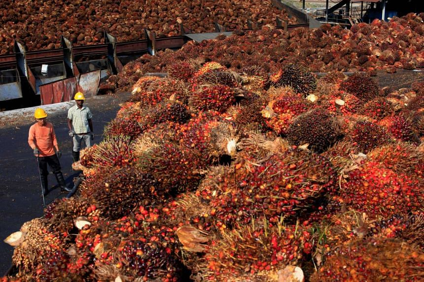 Workers stand near palm oil fruits inside a palm oil factory in Sepang, outside Kuala Lumpur.